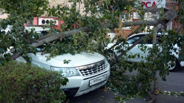 В центре Волгограда на иномарку рухнуло дерево