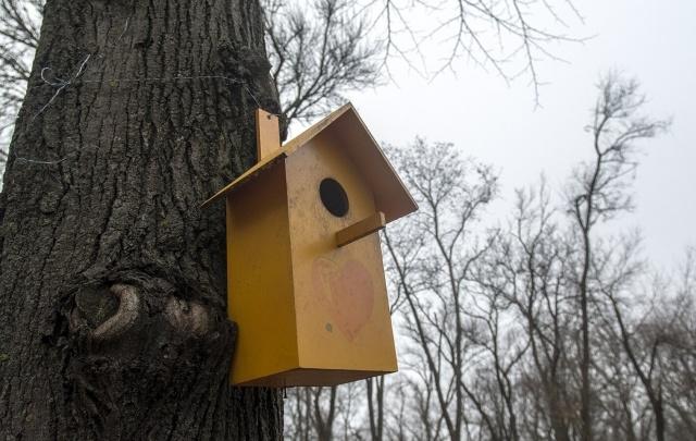 В ростовском парке «Дружба», где вырубают деревья, пройдет «Фестиваль скворечников»