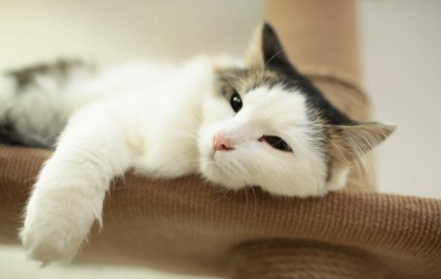 12 событий выходных в Перми: идем на выставку кошек и соревнуемся в жиме лежа