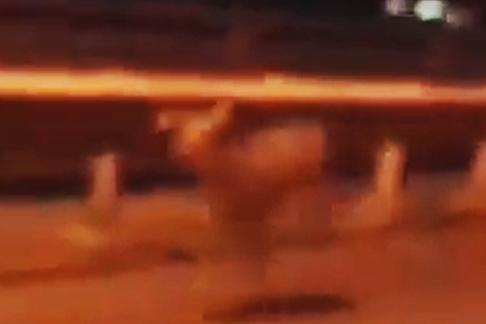 Ростовчане сняли на камеру бегущего по городской дороге олененка
