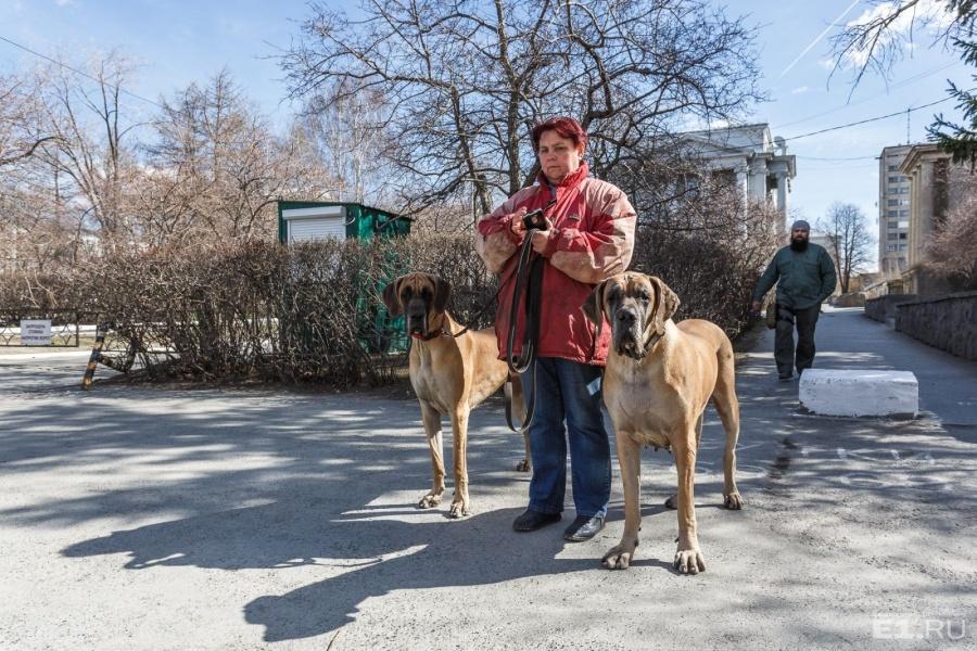 Вот такие жители Втузгородка нам встретились рядом с университетом.