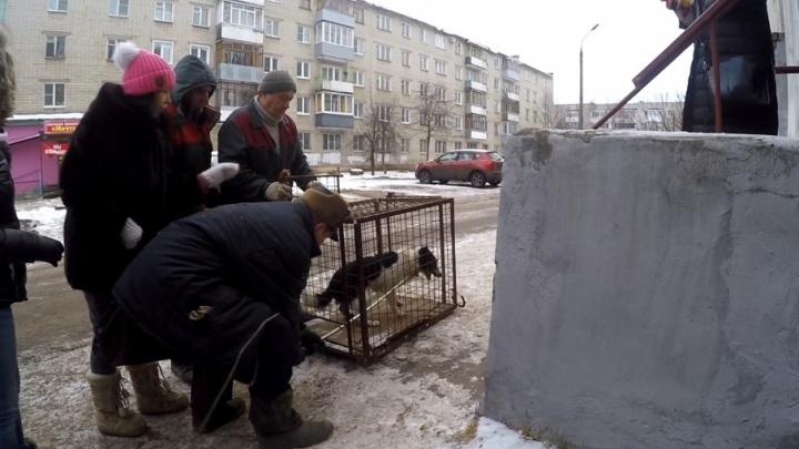 В Ярославле спасли собаку, застрявшую в подвальной решётке