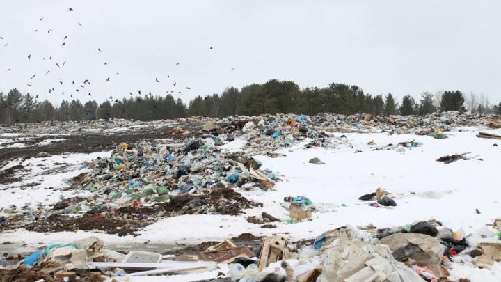Эксперты ОНФ направили 35 обращений о незаконных свалках в Поморье
