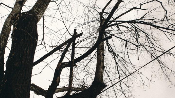 Почему во время непогоды в Тюмени массово падают деревья: разбираемся с экспертами