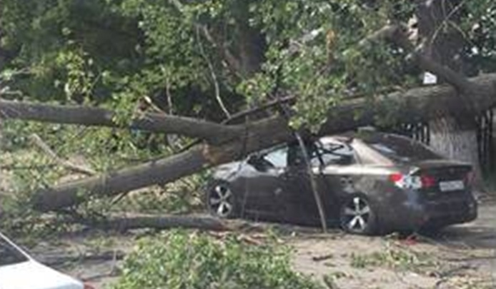 На Таганрогской из-за ураганного ветра тополь рухнул на иномарку