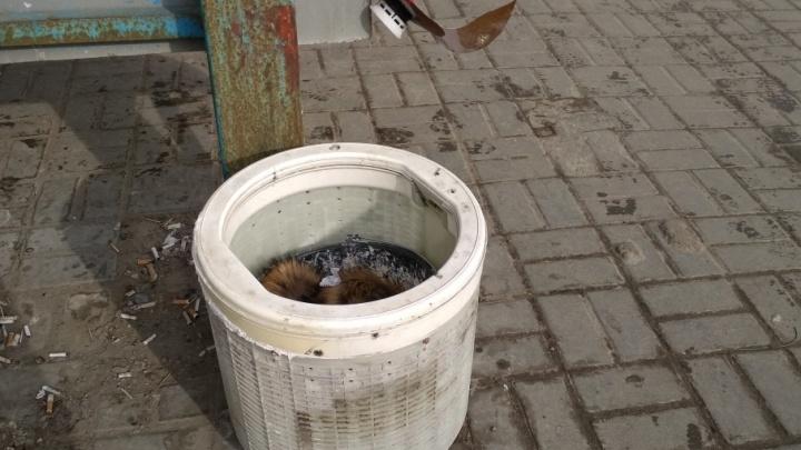В Волгограде пивные кеги и барабаны стиральных машин выдали за новые урны