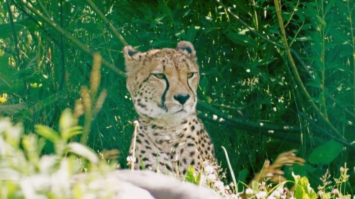 В Ярославле прикрыли три сайта со шкурами леопардов и белых медведей