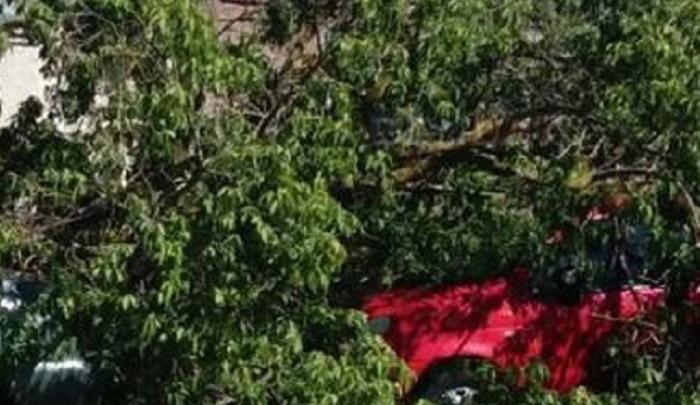 Старое дерево упало на три автомобиля на Металлургической