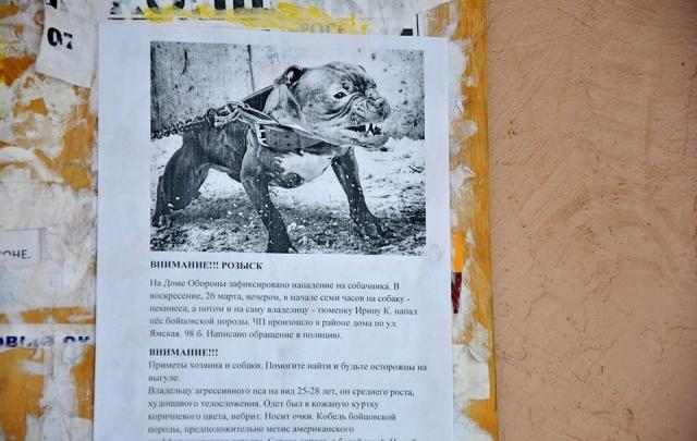 Собачники Дома Обороны разыскивают хозяина агрессивного бойцовского пса