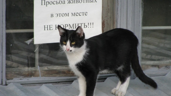 «Котики, вперёд!»: Яндекс изучил предпочтения волгоградцев