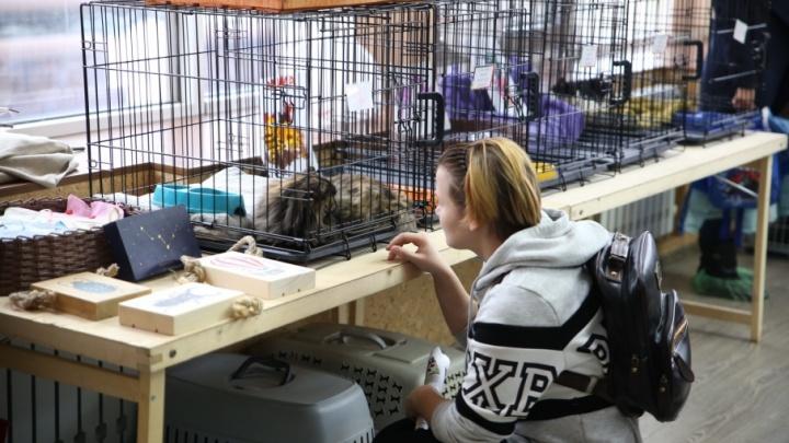 Пермский кошачий приют «Матроскин» ищет новый дом
