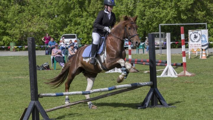Конкур, выездка и акробатика на лошади: в Челябинске прошло первенство города по конному спорту