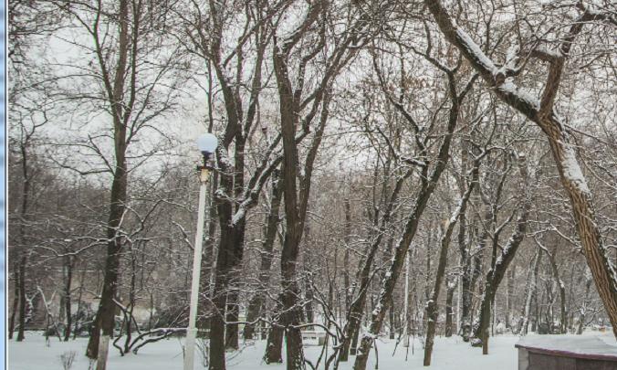 Житель Ростова предлагает запретить застройку Александровской рощи