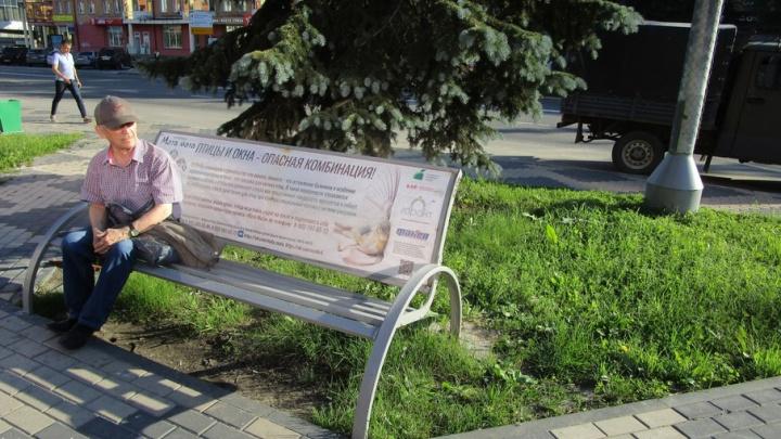 В Архангельске зоозащитники превратили городские скамейки в мини-энциклопедию