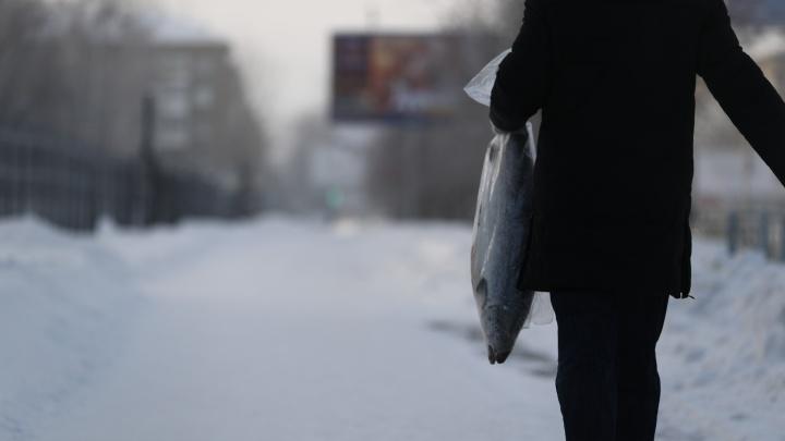 Как замерзал Новосибирск: 15 кадров из города, куда пришли аномальные морозы