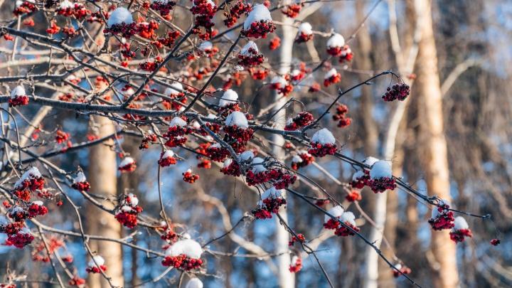 В Прикамье в выходные похолодает до -24градусов