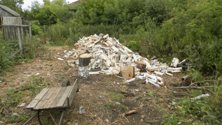 Хотел заготовить дрова: в Зауралье пенсионера подозревают в незаконной вырубке берез