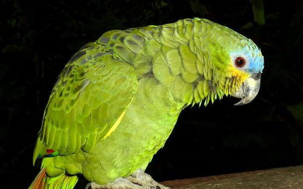 Зеленогорец захотел купить редкую птицу и перевел продавцу предоплату, но попался на уловку мошенников