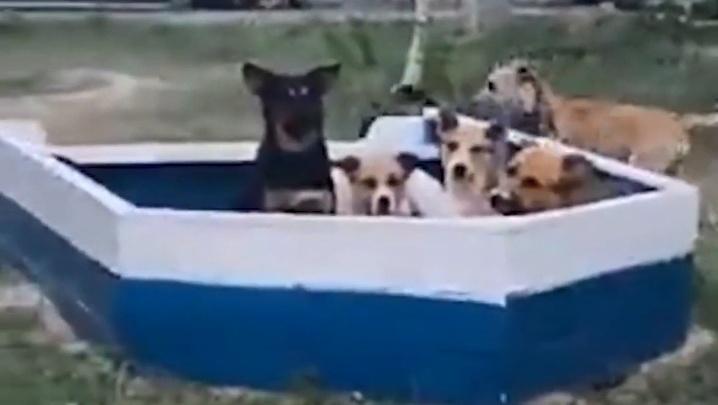 «Живут в детской песочнице»: волгоградцев затерроризировали стаи диких собак