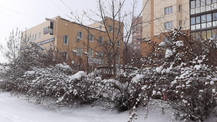 В Новосибирске целый день идет снег — посмотрите, как это красиво (онлайн-репортаж с улиц)