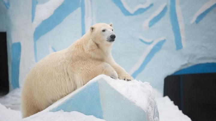 Белой медведице Герде 13 лет — публикуем 13 снимков мохнатой именинницы