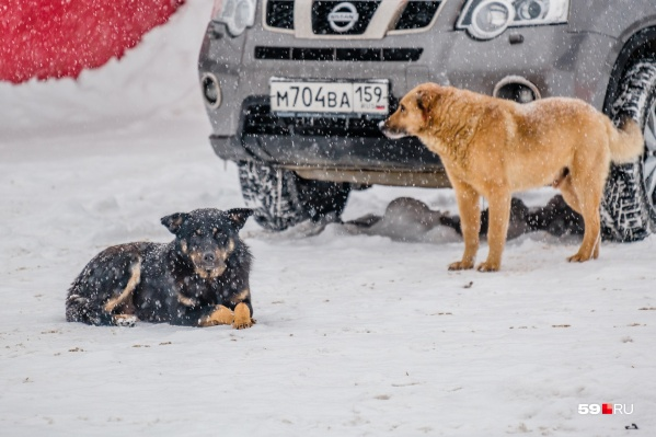 Больше всего бездомных собак в промзонах