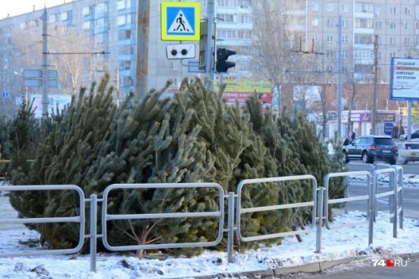 Уже через две недели новогодние деревья заполонят весь город