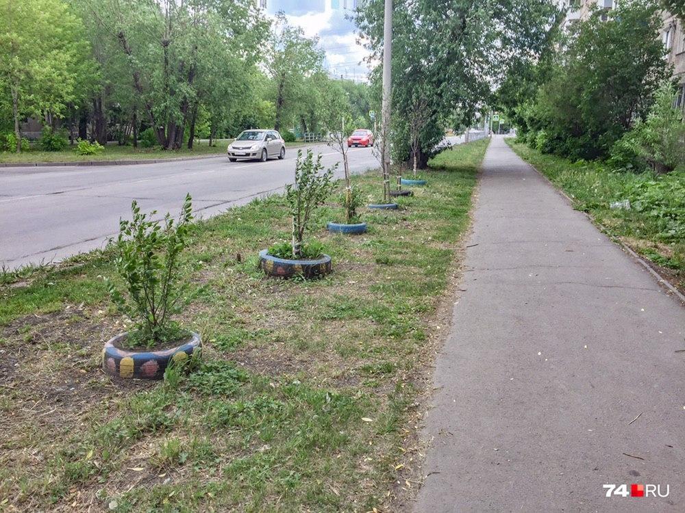 Приживутся ли высаженные деревья и кустарники, экологи администрации проверят в следующем году