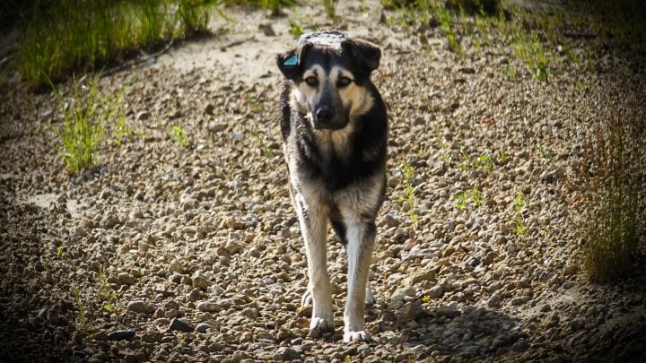 Спасатели вывезли с острова на Иртыше собаку и прозвали её Пятницей