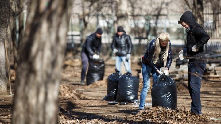 Волгоградских учителей гонят на субботники во время пандемии коронавируса