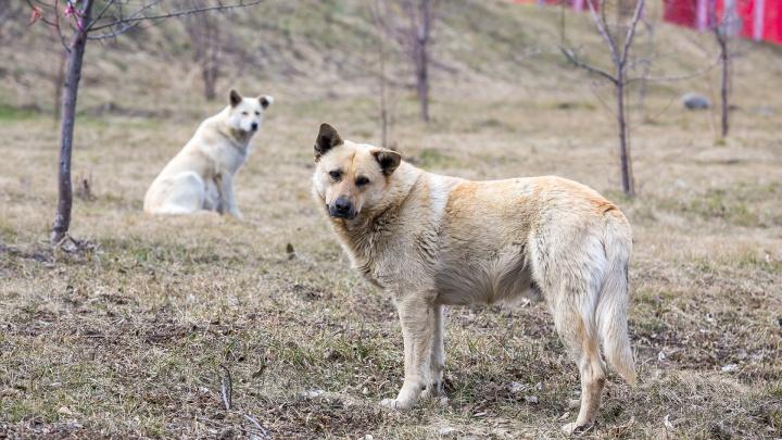 Половина укусов с бешенством приходится на домашних животных