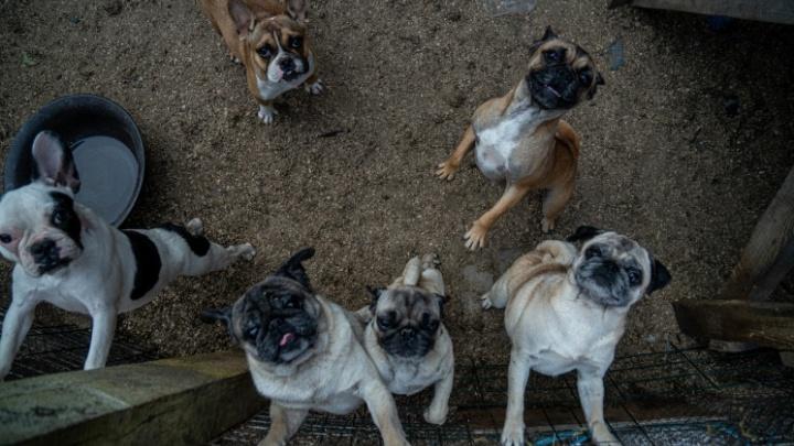 Скандальный собачий питомник в Новосибирске проверило управление ветеринарии. Вердикт: ничем не пахнет