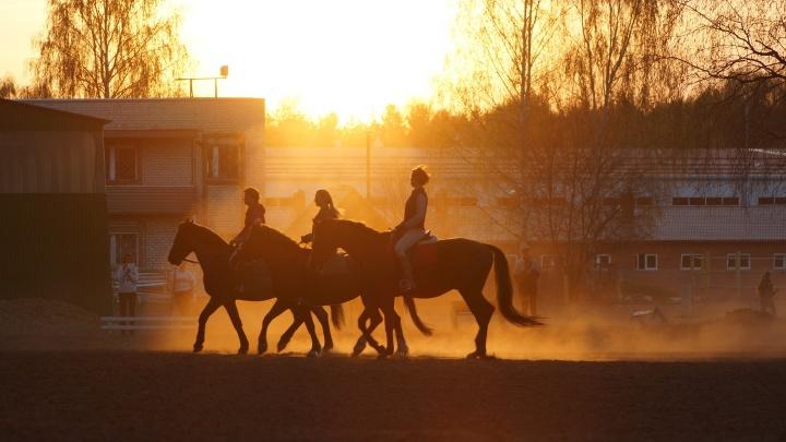 «Конь умер в страшных мучениях»: в Ярославле потребовали спасти от живодерства лошадей из спортшколы