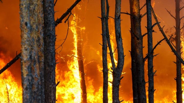 В Ростовской области вспыхнул крупный лесной пожар