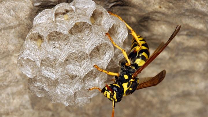 Оставляют жало или впрыскивают яд: рассказываем про опасных насекомых, которые могут покусать волгоградцев