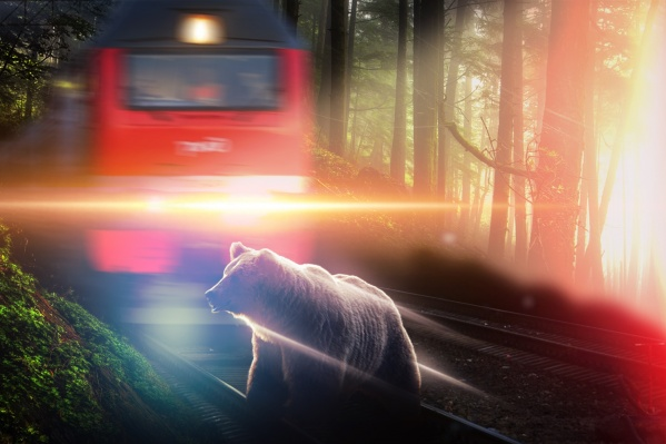 Зверь вышел перед локомотивом