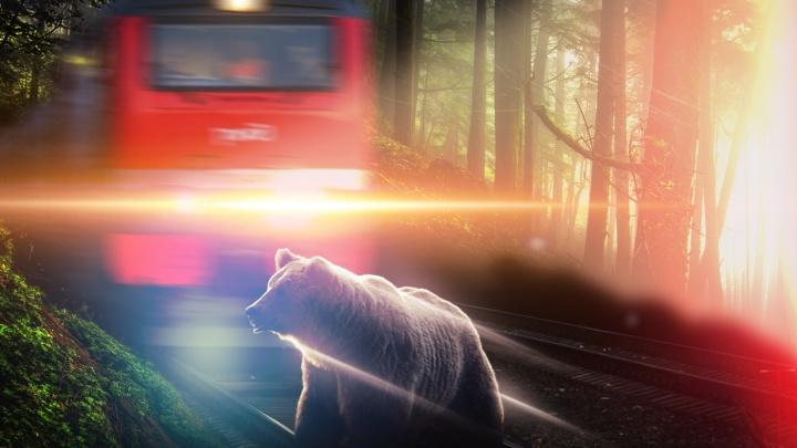 На севере Свердловской области пассажирский поезд сбил медведя