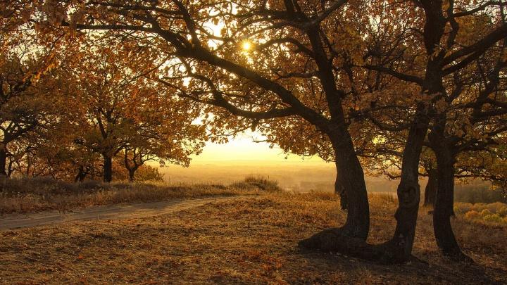 «Спешу снимать, пока погода позволяет»: волгоградский фотограф показала золотую осень на Хопре