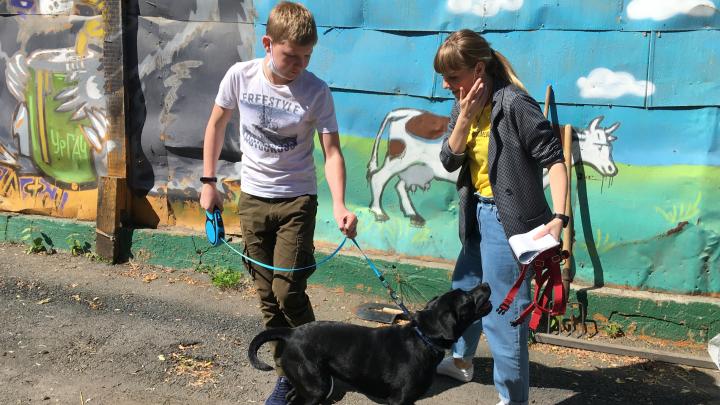Ошейники прокварцевали, шерсть вымыли с антисептиком: в Екатеринбурге отпустили с карантина собак и кошек