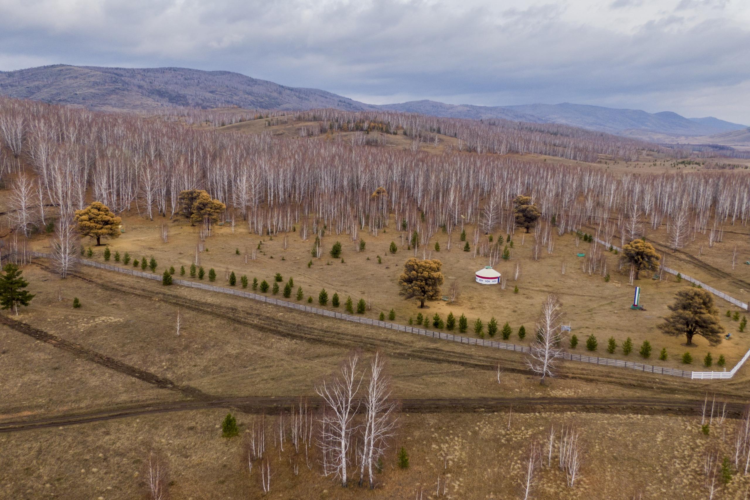Поляна, где растут кудрявые лиственницы, находится на опушке леса