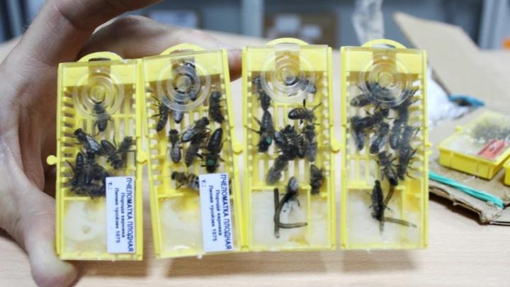 «Осторожно! Живые пчёлы!»: на почте поделились, какие самые необычные посылки отправляют омичи