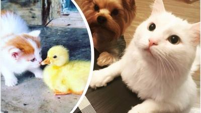 Френдзона для Барсика: 15 фото о странной дружбе домашних животных