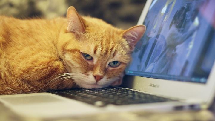 Работаете дома из-за коронавируса? Покажите нам свой хоум-офис, став участником конкурса от 72.RU