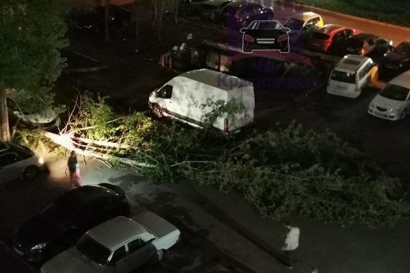 На тротуар упало дерево