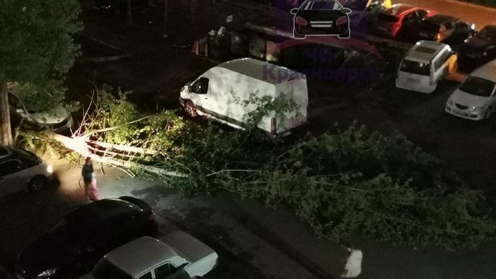 Ночной ураган сваливал деревья и заборы. Смотрим фото последствий