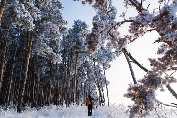 «Просто повышенная влажность воздуха», — скажет какой-нибудь черствый физик. А мы-то видим, как обычный лес превращается в сказочный