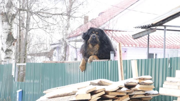 Бездорожье и вкрапления советского: фотопрогулка по весенним Пирсам