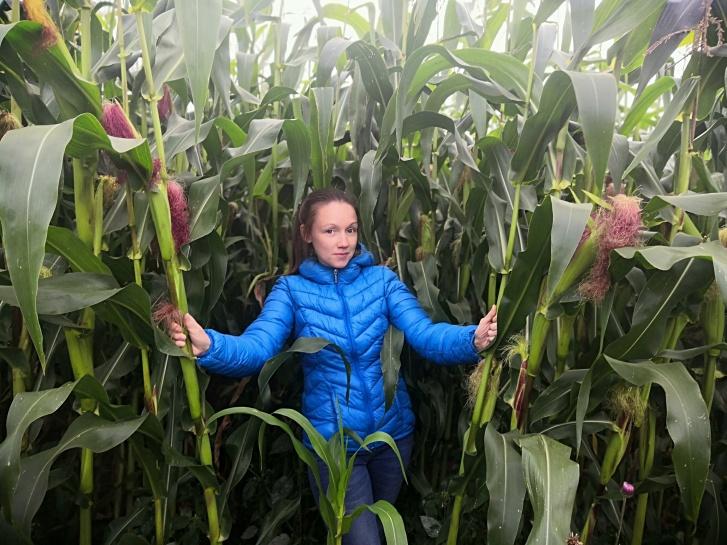 Фото в поле кукурузы. Такие фото этим летом были в тренде после того, как Дамир Юсупов посадил самолет с пассажирами в кукурузное поле
