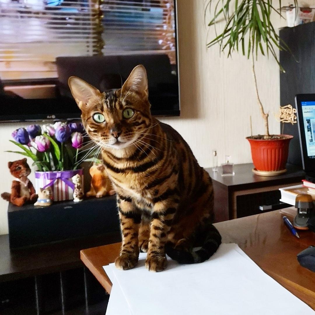 Вот такой замечательный котик помогает одной из наших читательниц работать дома