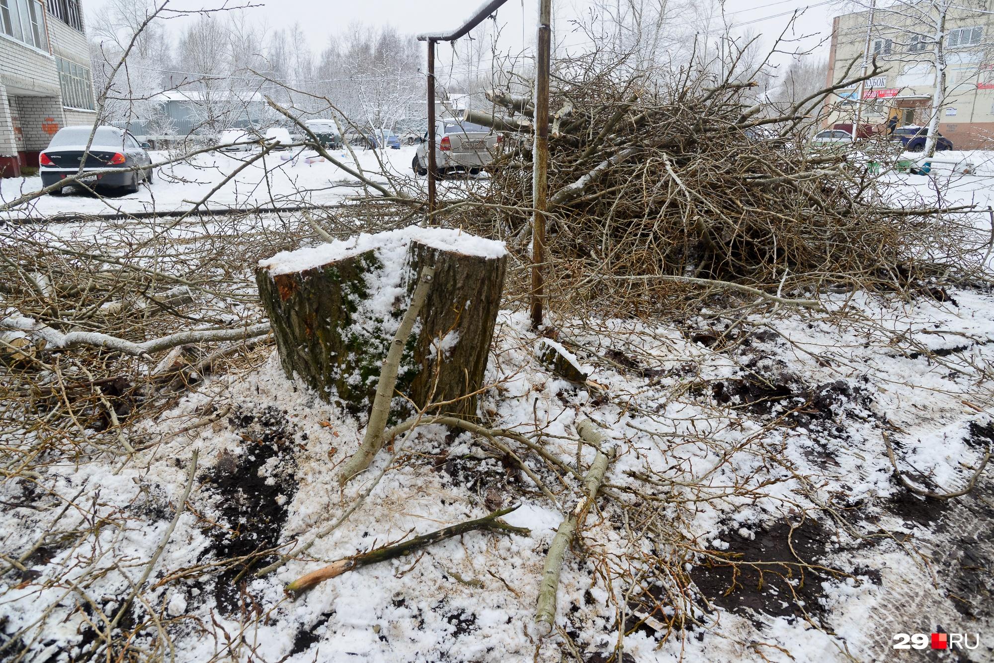 Старые тополя во дворах рубят почти под корень